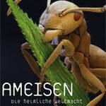 Ameisen – Die heimliche Weltmacht