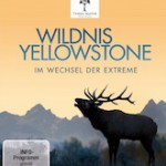 Wildnis Yellowstone