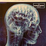 Die Gehirnmaschine