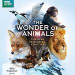 The Wonder of Animals – Tierische Überlebenskünstler